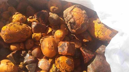 Natural Gallstones (Cow, Ox, Cattle)