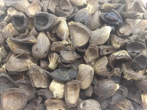 pslm kernel shell