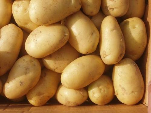 Farm Fresh Irish Potatoes