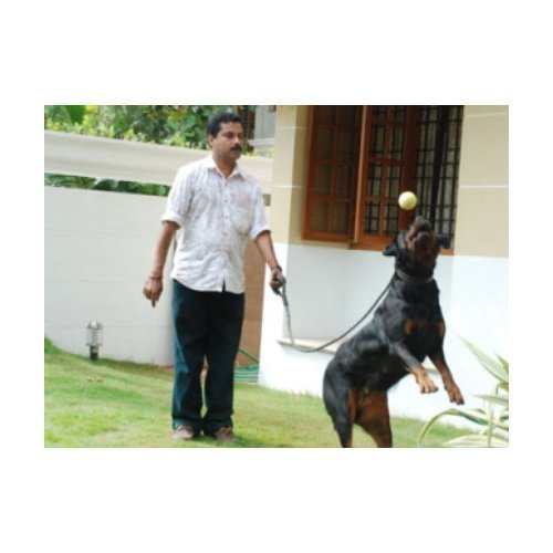 Dogs Hostel Services