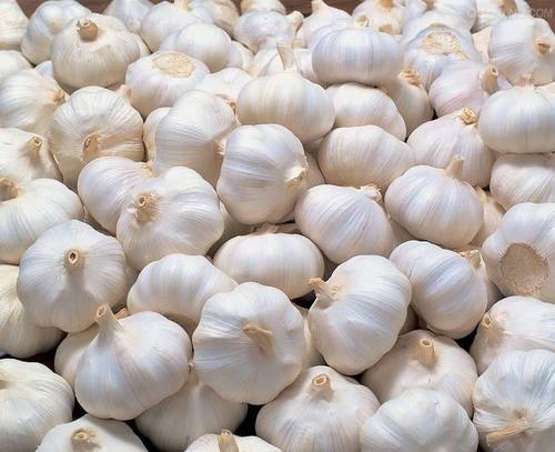 Farm Fresh White Garlic