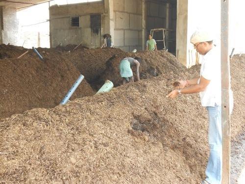 Mushroom Composting Consultancy Service