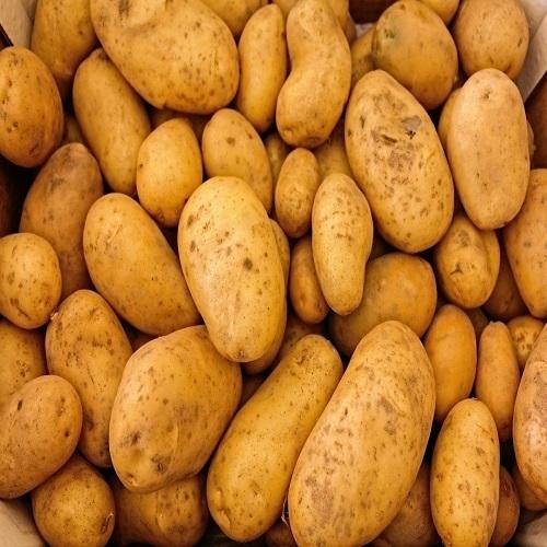 2018 Fresh Potato