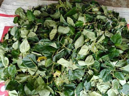 Dried Betel Leaves
