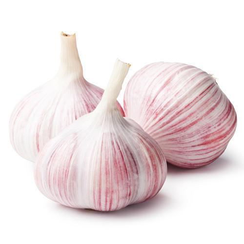 Best Quality Big Size Fresh And Dry White Garlic