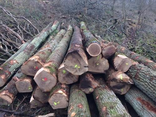 European Oak Logs Certifications: Fhytho And Origine Certificate