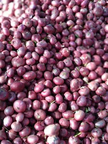 Red Onion In Nashik, Red Onion Dealers & Traders In Nashik, Maharashtra