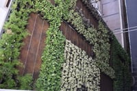 Stylish Artificial Green Walls