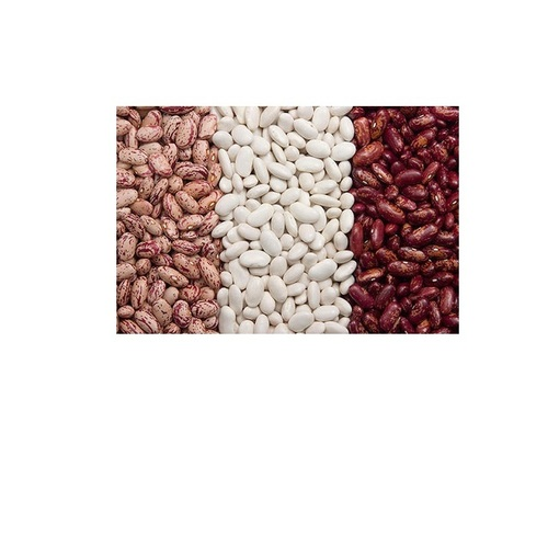 Red And White Kidney Beans