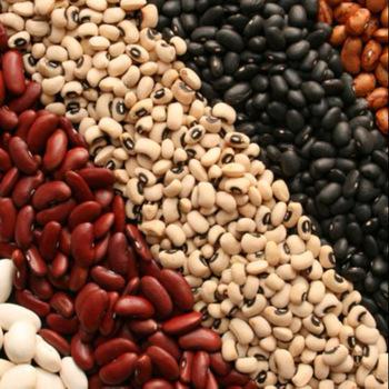 White, Red, Black And Light Speckled Kidney Beans