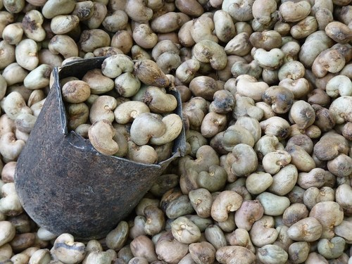 Raw Cashew Nut In Shell Certifications: Quality  Origin Inspection