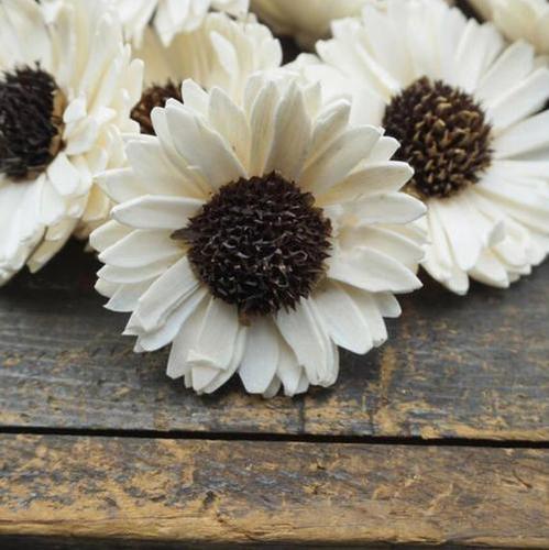 Exotic Sola Wood Flower
