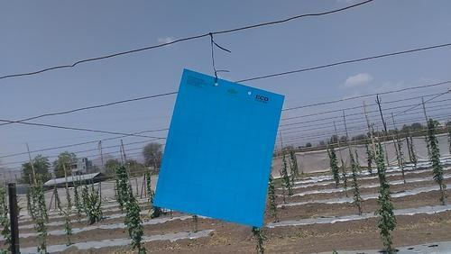Blue Sticky Insect Trap