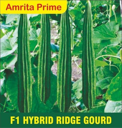 Hybrid Ridge Gourd Seed