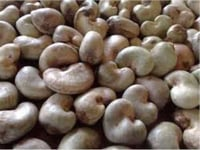 Premium Raw Cashew Nuts