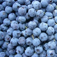 Quality Tested Frozen Blueberry