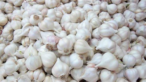 White Color Fresh Garlic
