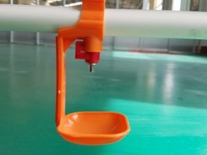 Watering System For Poultry