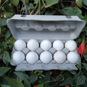 10 Egg Packing Tray