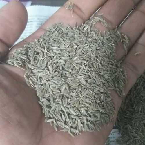 Fresh Organic Cumin Seed