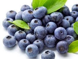 Natural Fresh Indian Blueberries - Anusaya Fresh India Pvt