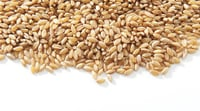 Natural Indian Wheat Seed