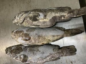 Grouper Gutted And Scaled Fish