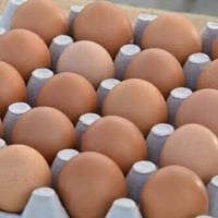 High Nutrition Poultry Egg