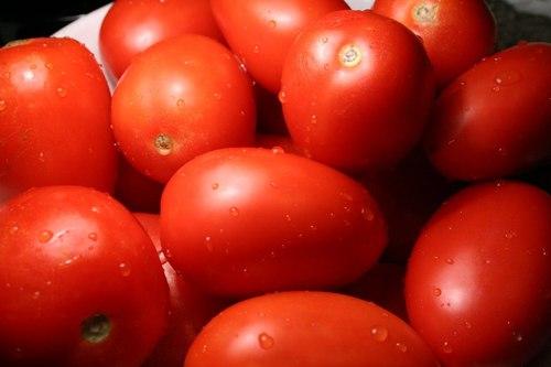 Farm Fresh Red Tomato