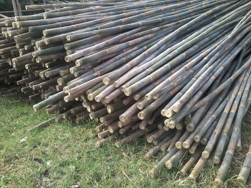 Raw Bamboo With Low Price