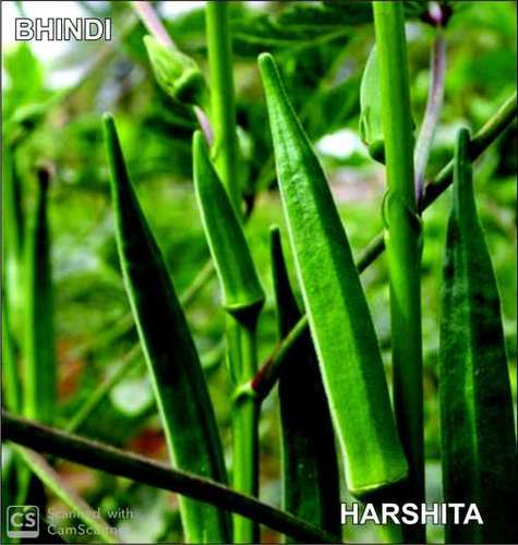 Quality Approved Okra Seed
