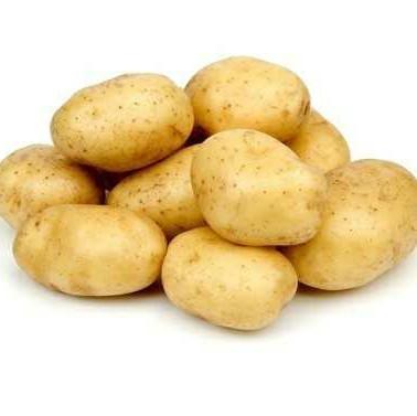 Organic Oval Shape Fresh Potato