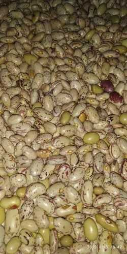Fresh Quality Tested Organic Kidney Beans