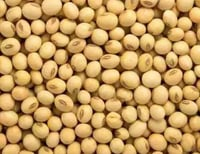 Small Sized Organic Soy Beans