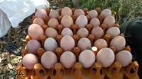 Nutritional Brown Organic Eggs