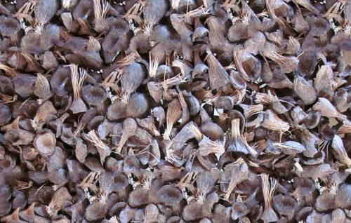 Palm Kernel Shell For Biofuel