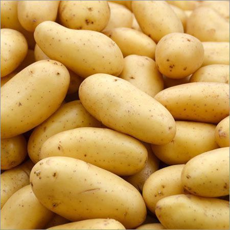 Organic Oval Shape Fresh Potato