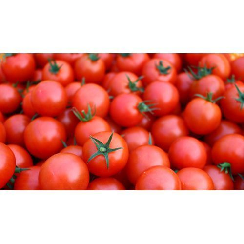 Red Color Fresh Tomatoes