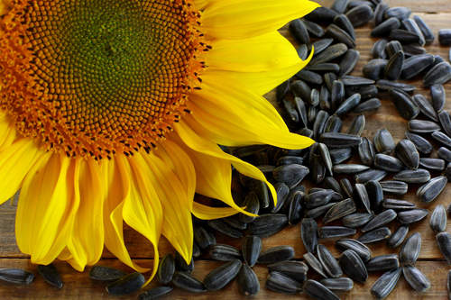 Good Quality Black Oil Sunflower Seeds