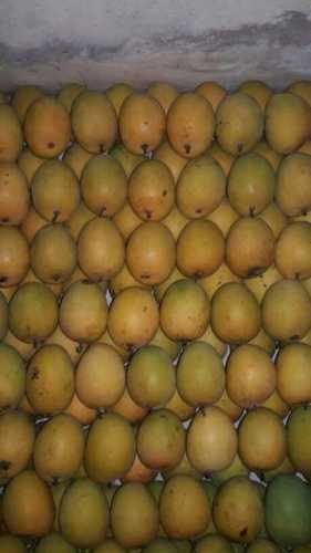 Fresh Mango Fruits (Yellow And Green)
