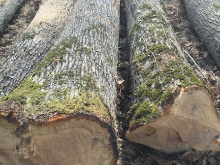 Highly Durable Hard Wood Oak Logs