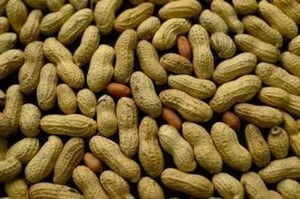 Organic Groundnut With Shell