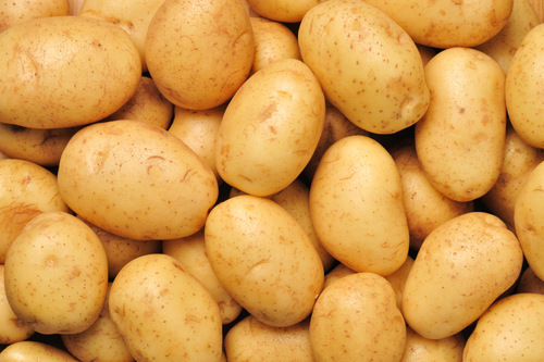 Fresh Potato Vegetable