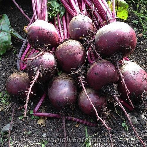 Round Organic Fresh Beetroot