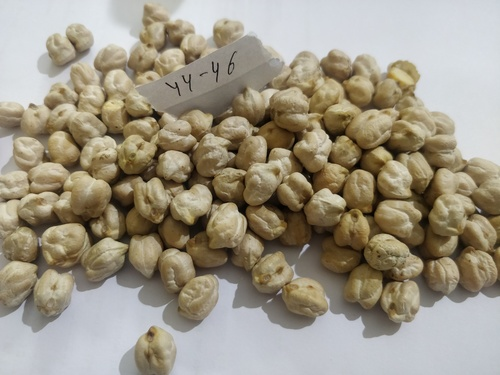 Pulses In Indore, Pulses Dealers & Traders In Indore, Madhya Pradesh