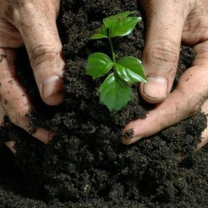 Organic Bio Fertilizers For All Types Of Crops