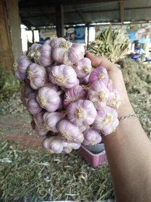 Pure Natural Thai Garlic