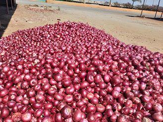 Farm Fresh Red Onion
