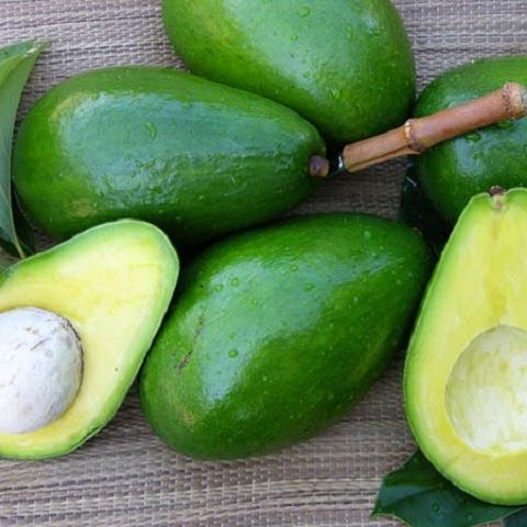 Highly Nutritious Fresh Avocado