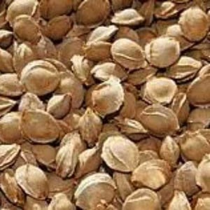 Apricot Seeds And Kernels